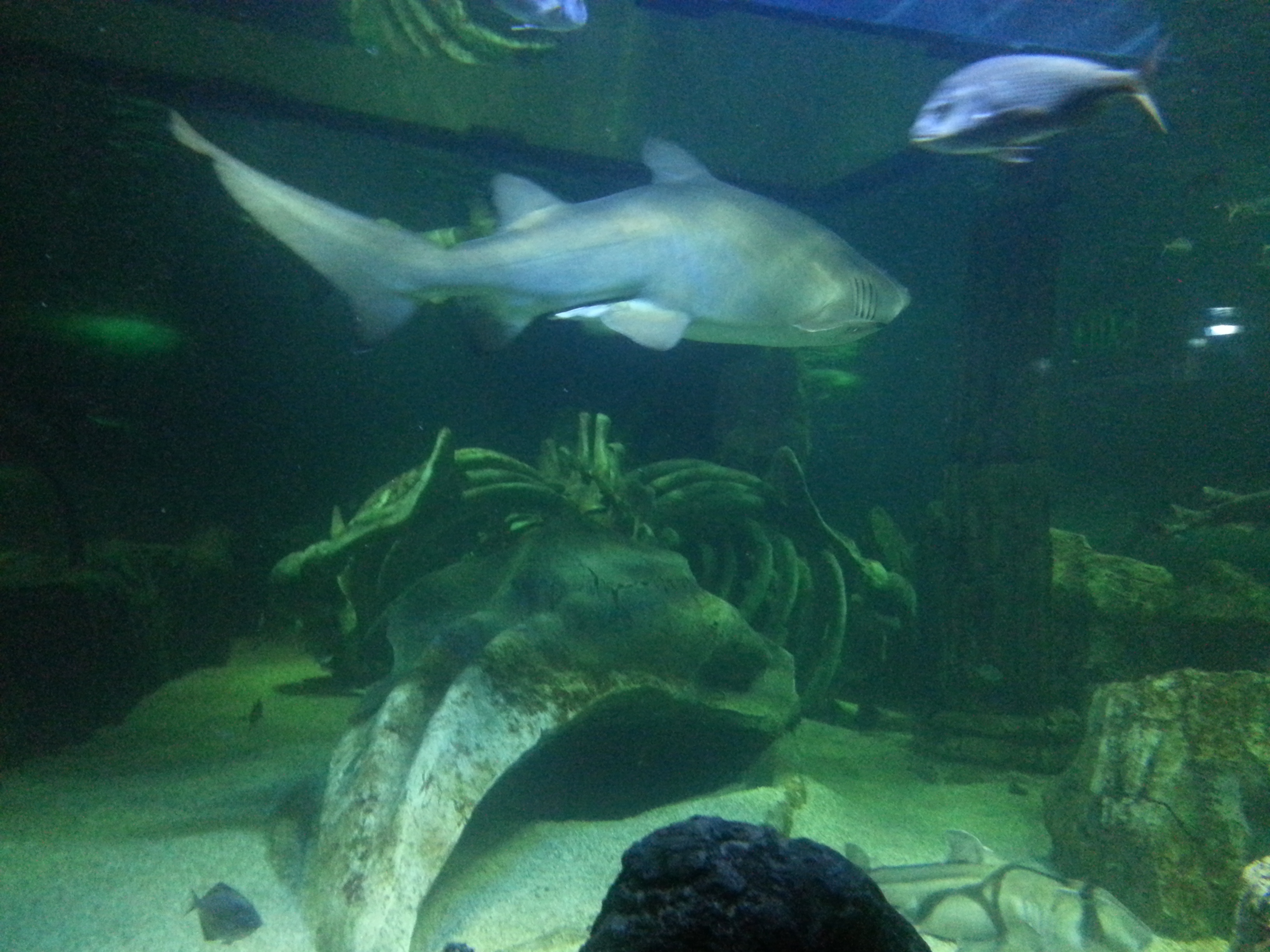 100 Bill Gates Aquarium In House Amazing Facts About The